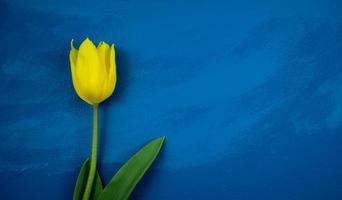tulipe jaune plat poser sur résumé grunge bleu foncé fait à la main photo