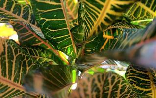 Fond de texture de feuilles naturelles abstraites colorées vives photo