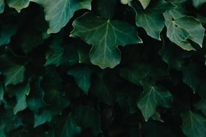 un fond de feuilles vert foncé avec texture et espace de copie