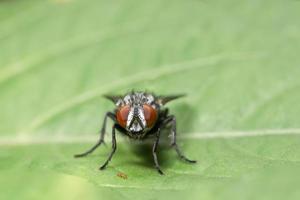 macro vole insecte photo