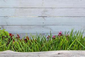 bois blanc avec de l'herbe et un tronc photo