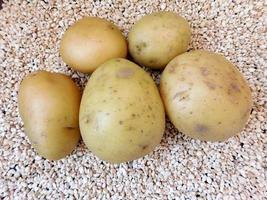 pommes de terre sur lit de galets