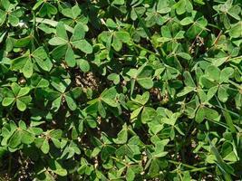 feuilles vertes en buissons