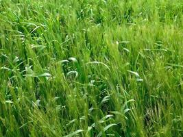 carré d'herbe