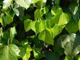 plante verte dans un jardin