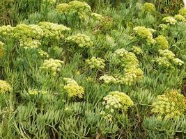patch d'herbe et d'arbustes