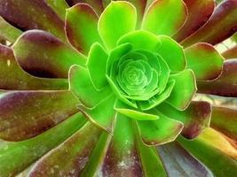 gros plan de succulentes