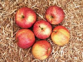 six pommes sur un lit de foin ou de fond de paille