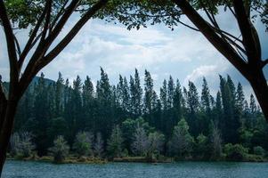 Lac et forêt de pins au parc public de liwong à Songkhla, Thaïlande photo