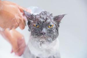 chat en colère dans la baignoire