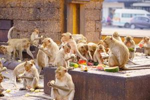 Macaques mangeurs de crabe mangeant des fruits à Lop Buri, Thaïlande photo