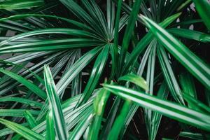 feuilles de palmier vertes photo