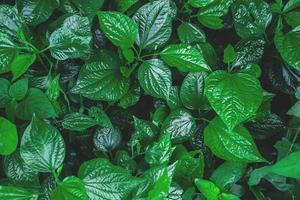 détail de feuilles vertes photo