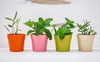 herbes poussant dans des pots