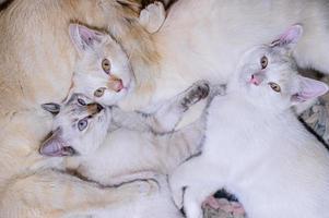 trois chatons couchés sur le sol photo