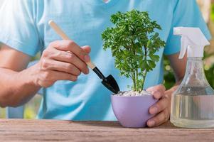 Personne plantant des arbres dans des pots, concept de plantes d'amour aiment l'environnement photo