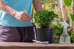 Les gens plantent des arbres dans des pots concept de plantes d'amour aiment l'environnement photo