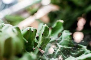 cactus avec la lumière du soleil photo