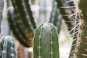 cactus en été photo
