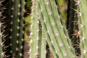 cactus avec fond de texture photo