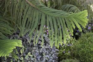 fond d'arbre à feuilles persistantes photo
