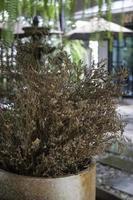 petite plante de jardin marron