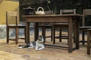 beau chat dans le jardin photo
