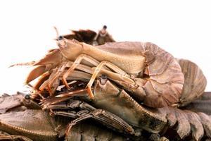groupe de homard