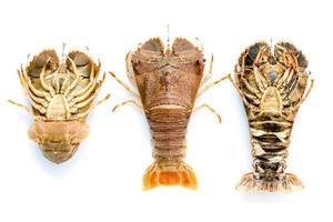 trois homards à tête plate