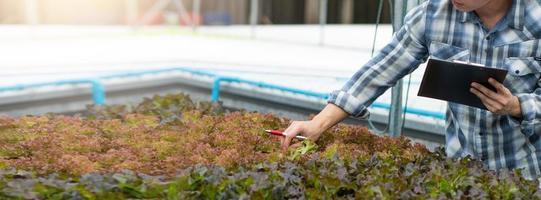 agriculteur examinant les légumes hydroponiques photo