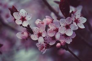 belle fleur rose au printemps