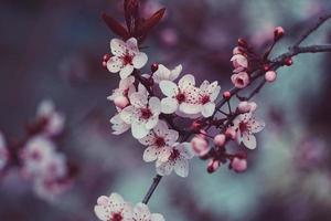 fleur rose au printemps