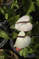 plante ornementale dans le jardin photo