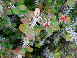 plantes épineuses ou bruyères photo