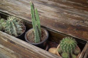 beaux cactus verts dans une boîte en bois