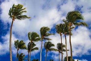 des vents forts balancent les palmiers