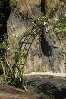 arc avec des vignes et des plantes photo