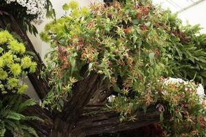 plantes d'été dans une serre photo