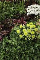 fleurs de jardin à l'extérieur photo