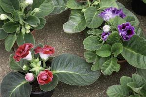 fleurs rouges et violettes photo