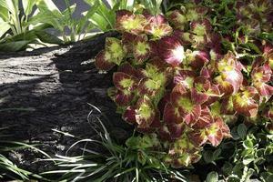 plante rose et verte à l'extérieur photo