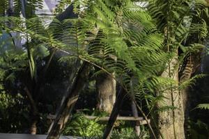 jardin arboré photo