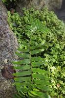 plante verte dans le jardin photo