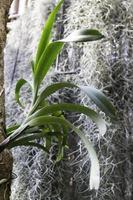 feuilles d'orchidées avec de la mousse
