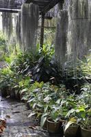 plantes et mousse à l'extérieur