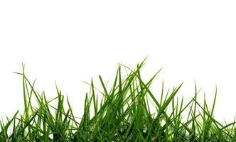 herbe isolé sur fond blanc photo