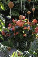 plante suspendue dans un jardin photo