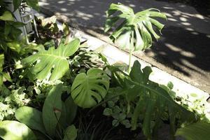 variété de plantes d'été photo