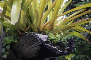 plantes ornementales dans le jardin