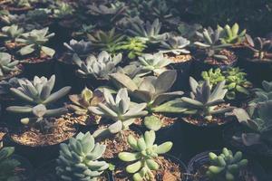 groupe de plantes succulentes